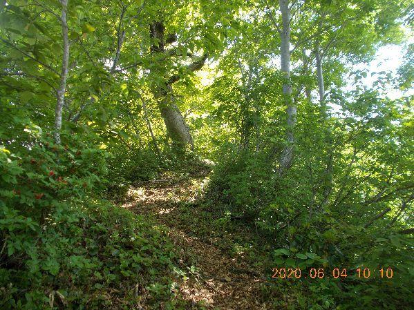 木陰の登山道