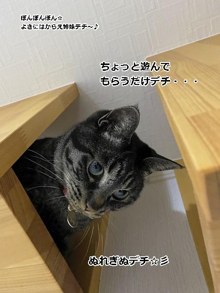 IMG_E9429.jpg