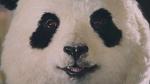桃月なしこ サカイ引越センター「第1話 まごころパンダ、登場」篇 0006
