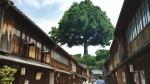 戸田恵梨香 大樹生命 「日本中の街に大樹」篇 0002