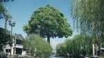 戸田恵梨香 大樹生命 「日本中の街に大樹」篇 0004