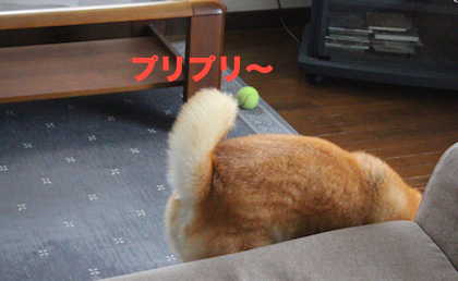 IMG3066-2.png