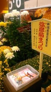 191025 菊祭り