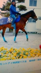 191221 有馬記念アーモンド