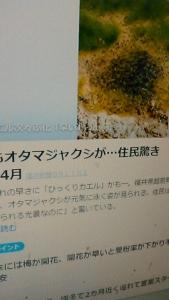 200221 オタマジャクシ