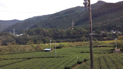 10/20 茶畑にSL