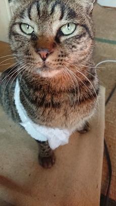 紙パンツをはく猫