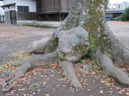 23木の根IMG_6815