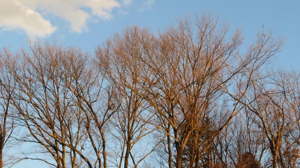 1赤い木々IMG_6917