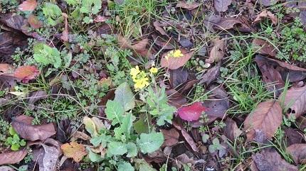 3名の花IMG_6969