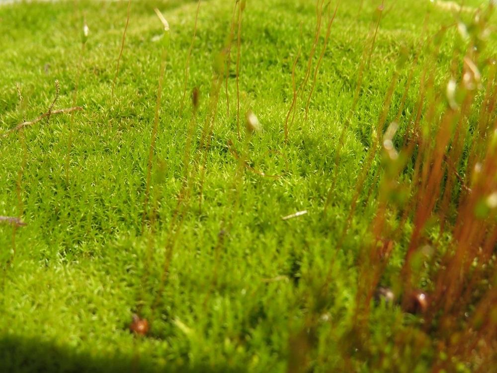 緑の草原MG_5734