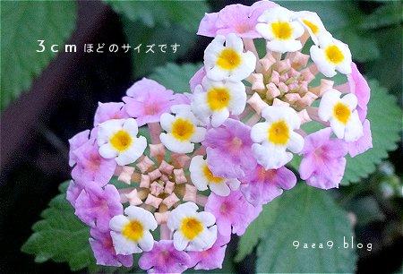 すごくちっちゃい 花