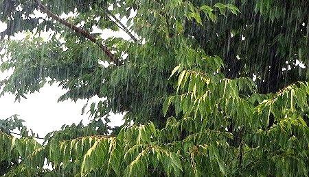 雨の日でございます