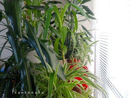 Nantonaku 観葉植物 窓 ニトリブラインド