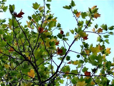 秋なのよ 秋