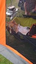 キャンプ0814 (1)
