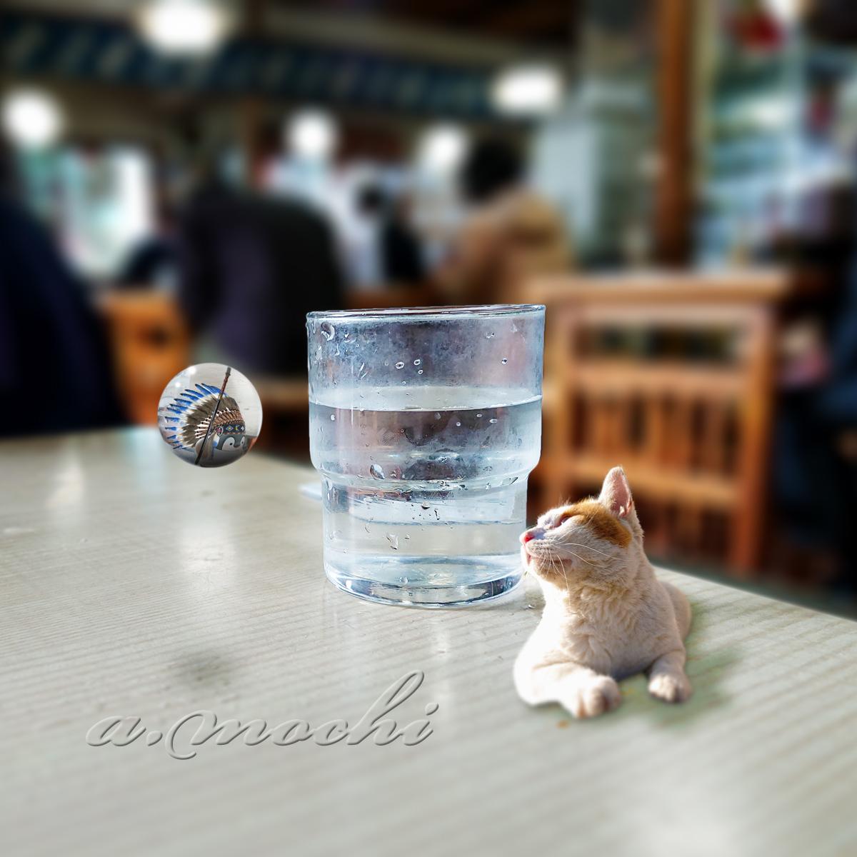 5_tachibana_ohiya.jpg