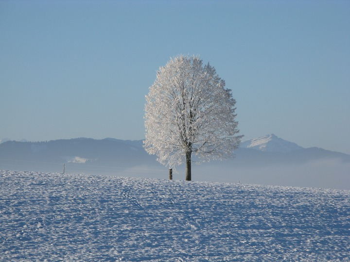 tree-horizon-mountain-snow-cold-winter-1116028-pxhere-com.jpg