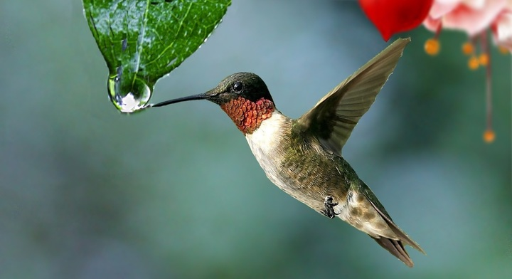 water-nature-drop-bird-wing-plant-1057937-pxhere-com.jpg