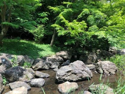 泉谷公園4