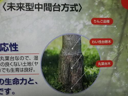 原田種苗カタログ 2019 11 6-2
