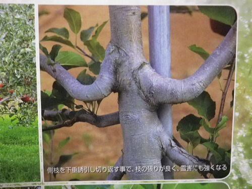 原田種苗カタログ 2019 11 6-3