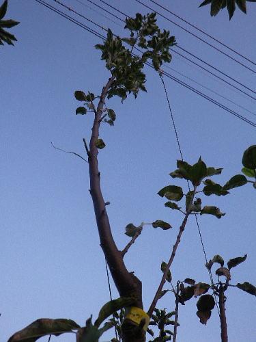 バレリーナツリー2019 11 6-1