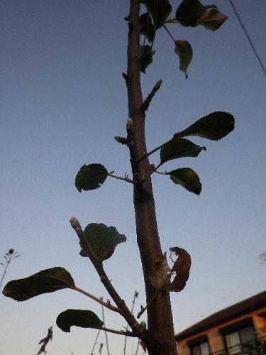 バレリーナツリー2019 11 6-2