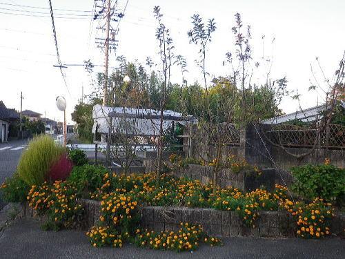 バレリーナツリー2019 11 6-3