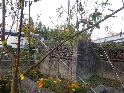 バレリーナツリー2019 11 6-4