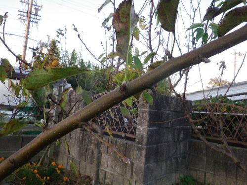 バレリーナツリー2019 11 6-5