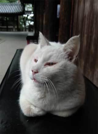 20190528_kibitsu_cat_002.jpg