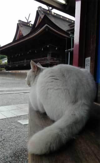 20190528_kibitsu_cat_008.jpg