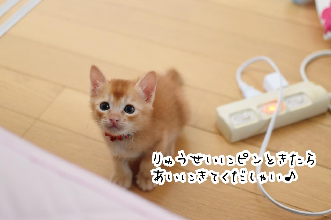 fc2blog_202009012036229ee.jpg