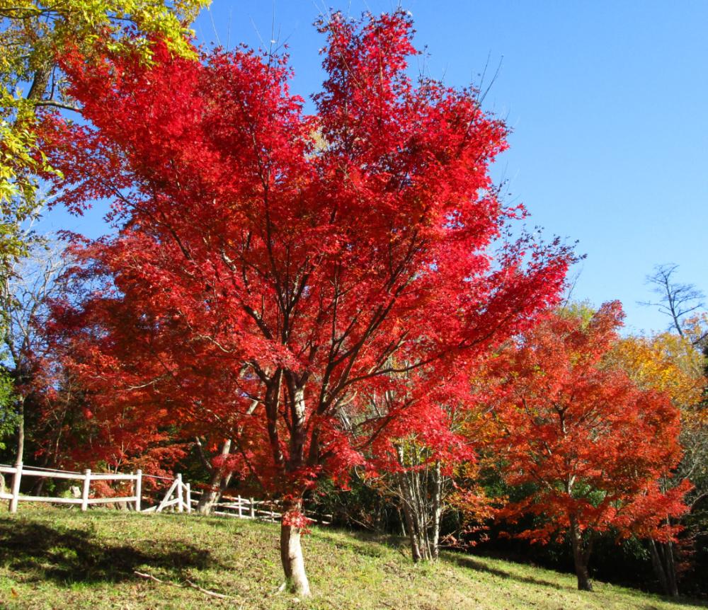 有馬富士公園IMG_0248