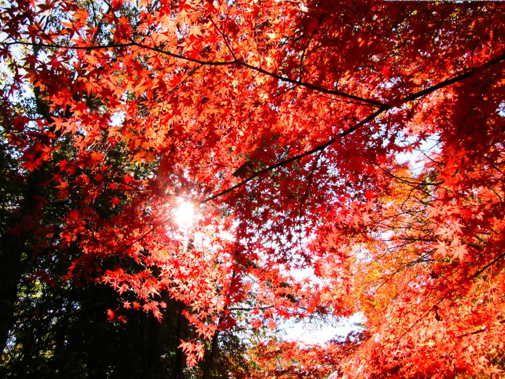 有馬富士公園IMG_0231