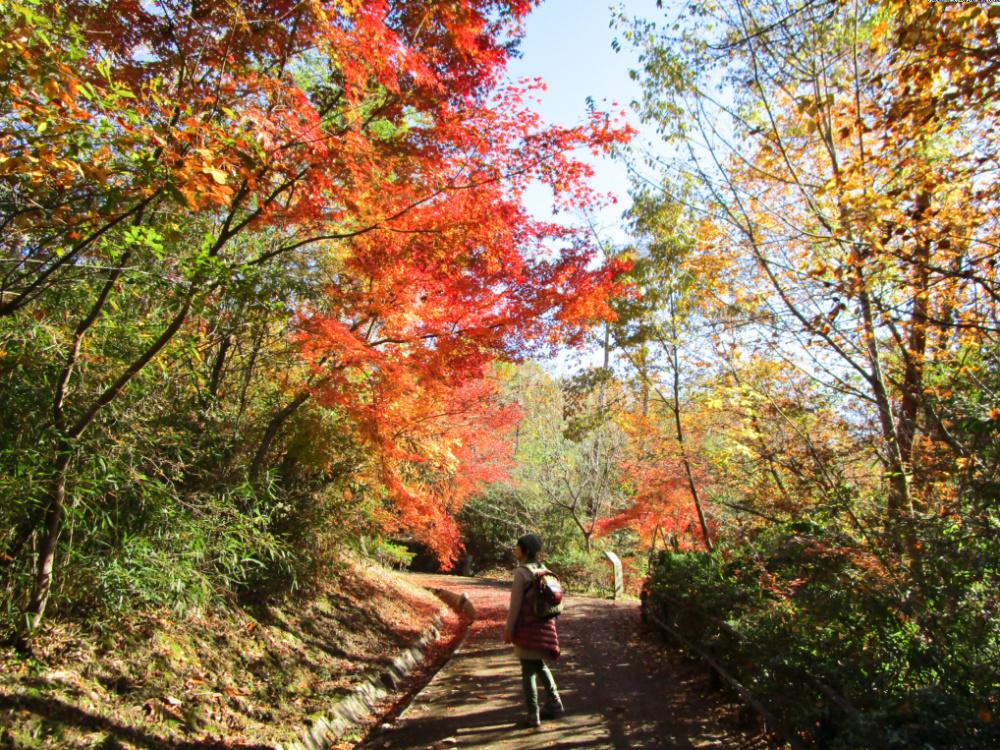 有馬富士公園IMG_0242