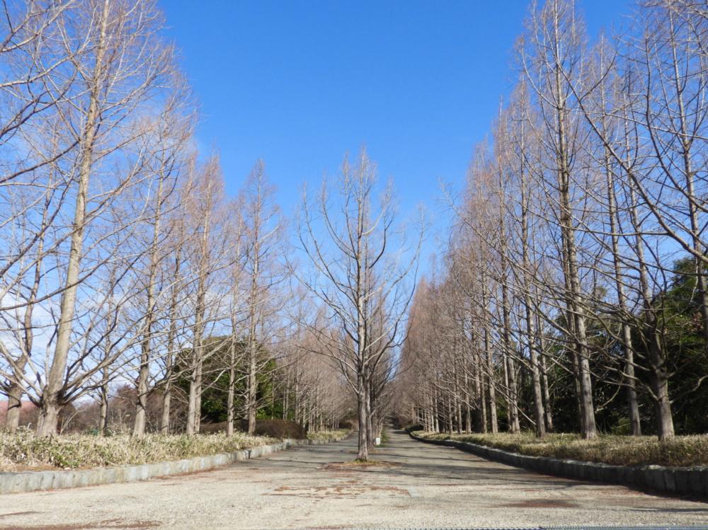 森林植物園DSCN2096