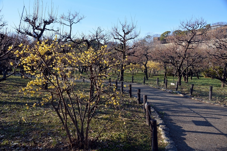 大阪梅園・真冬 (11)