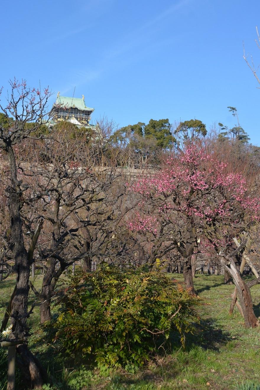 大阪梅園・真冬 (015)