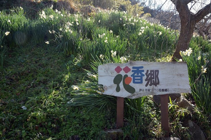 玉祖神社の花香郷 (1)