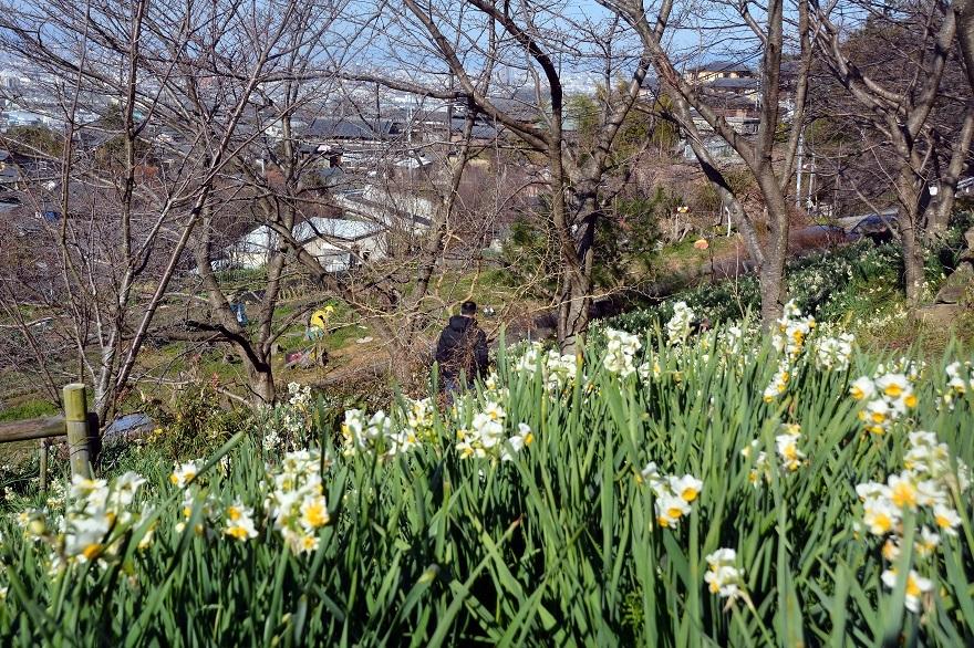 玉祖神社の花香郷 (10)