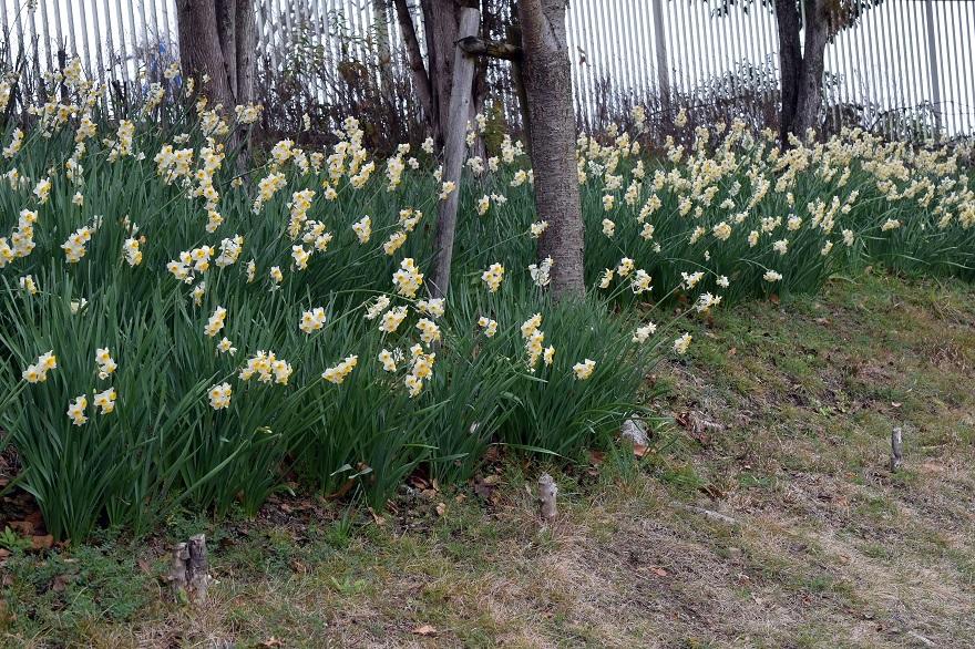 花の文化園・真冬2020 (0)