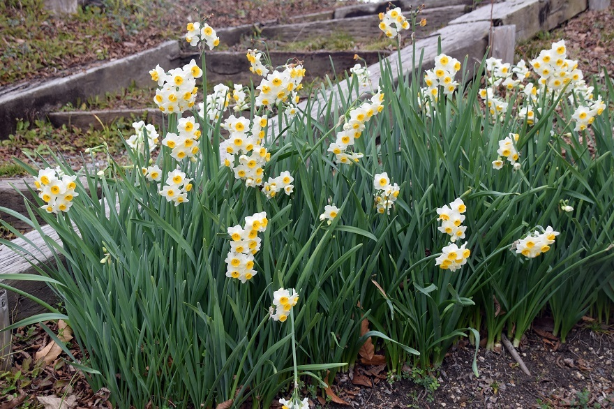 花の文化園・真冬2020 (1)