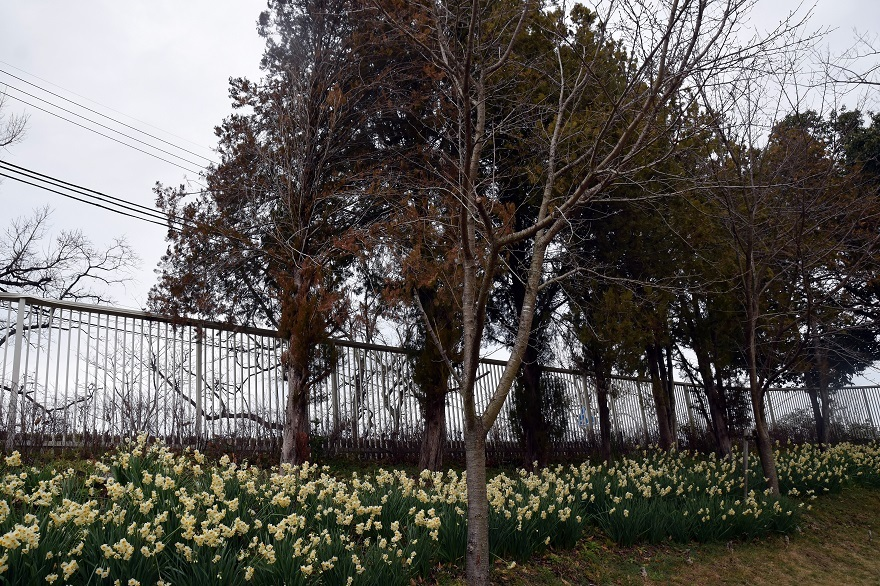 花の文化園・真冬2020 (10)