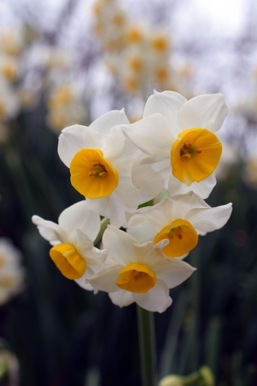 花の文化園・真冬2020 (6)