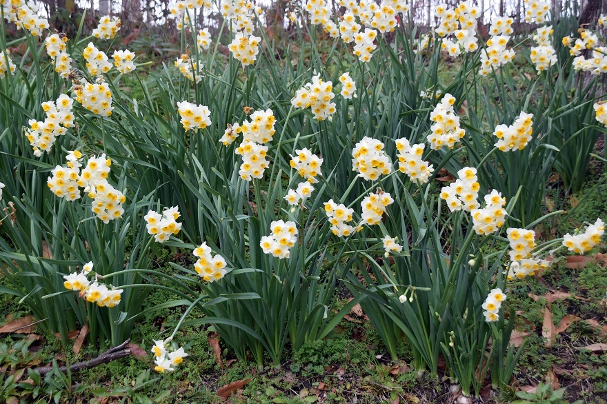 花の文化園・真冬2020 (8)