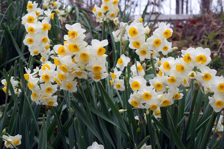 花の文化園・真冬2020 (3)