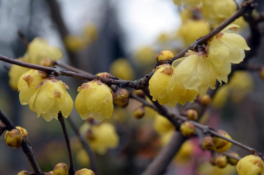 花の文化園・真冬2020 (16)