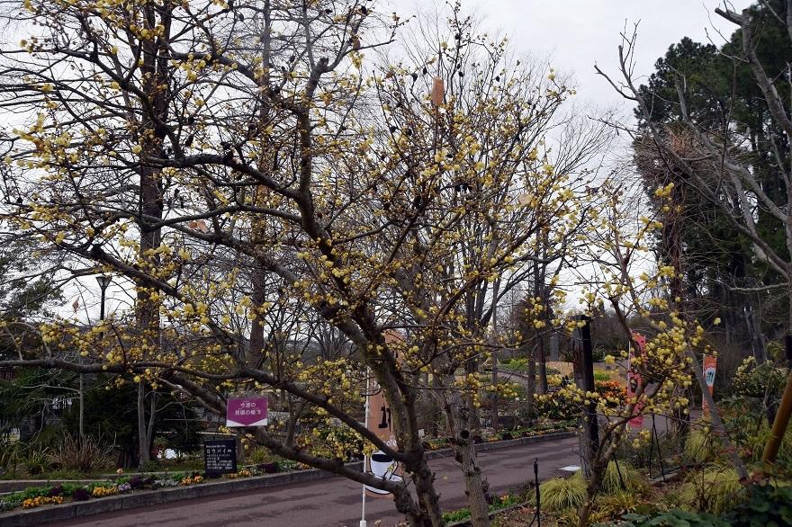 花の文化園・真冬2020 (20)